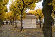 Jesień 2014 / Sopot widziany jesienią
