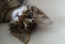 Gatinhas / Gatinhas Pina (no céu dos gatinhos), Pina II, e Betsie