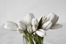 Прекрасное живое / The most beautiful flowers.