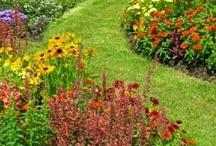 In The Garden / by Pamela Mead