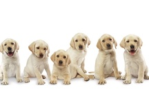 Dog Breeds Information - Pet Club India / Pet Club India is intended to be the epicenter for all pet lovers, vets, pet shops, pet lodges, pet trainers, breeders, pet food and all accessories. Pet Club India has the vision of becoming the most preferred platform for the various pet communities across India.