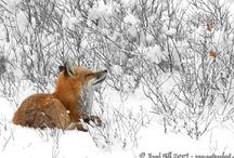 Photo Wildlife