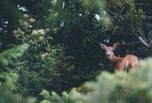 Wild Anim{a}ls