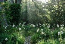 Garden and Landscape Inspiration