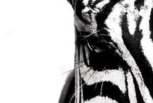 Mooi Goed // Animals / Animals in black and white