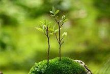 grönt är skönt