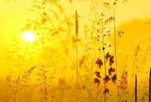 Luonto / Nature