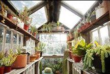 ••• Garden ••• / plants, gardens, tips ••• ogród, rośliny, porady, pomysły