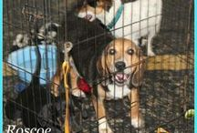 pets needing rescued