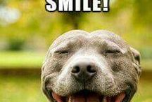PIT BULL'S LOVE THEM NOT HATE THEM