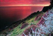 Scotland, heather, moss etc