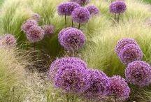 Co rośnie w ogrodzie? / Kwiaty, rośliny, zioła, przegląd ogrodowej fauny
