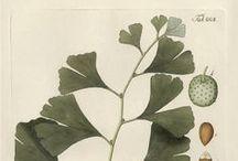 ••• Botanical boards ••• / tablice botaniczne