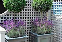 Aranżowanie ogrodu od A do Z / DIY, poradniki, rzuty ogrodów