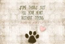 ANIMAL QUOTES & SAYINGS / by Kathy Lytle