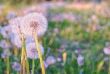 DESKTOP BACKGROUND / A board of dektop background photos (16:9 - 1600 x 900 px) and some other flower