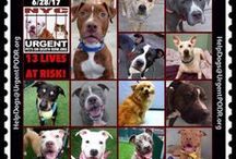 DEATH ROW DOGS PLEASE SHARE 2 SAVE THEM!!!!