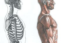 Anatomy References