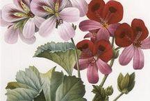 •Botanical•Illustrations•