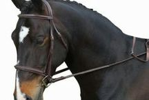 Horse Supplies / Finding horse supplies that are the best value for the money