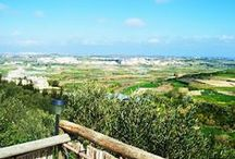 Tan-Nixxiegha Olive Grove / Owned and managed by Mr. Ray and Charlie Vella. Located in Mgarr, Malta.