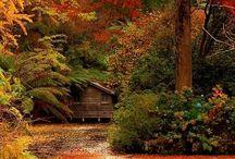 Fall / Fall interior ideas, fall inspiration, fall clothes, whatever falls into the description fall
