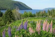 The Blooms of Cape Breton / Cape Breton is home to some beautiful flora and fauna. With its wild woods, rolling highlands, serene waters, majestic marshes, stunning beaches, and dreamy fields, it's easy to see why a diverse range of plants, trees and flowers would call this island home. It's also easy to see why you'll want to do the same once you've visited!