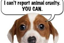 Fight Animal Abuse / anti animal cruelty and anti animal abuse graphics
