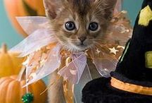 Pets in Halloween Costumes / Cute dogs and cats dressed up for Halloween.