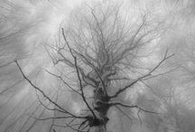 Arbres / Photographies d'arbres