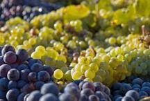 Vino e dintorni / L'Italia dei vini su Buy-me