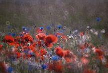 FLORES HERMOSAS / me encanta las flores. / by Irene Llorca Arrando