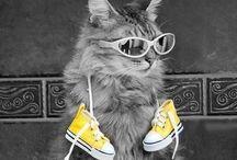 Cats :-)