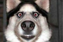 Dogies