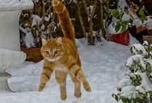 Yavru Kediler / Kedi Yavruları koyarım