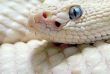 snake / snake