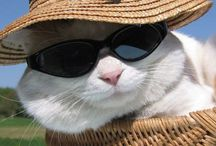 Kediler / Yavru kedi koyarım