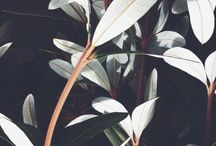 plantlife / plant inspiration, indoor plants, garden plants, greenery and lovely leaves