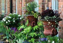 LD_КОНТЕЙНЕРНОЕ ОЗЕЛЕНЕНИЕ / container garden / Вдохновляющие идеи и стилевой подбор по озеленению садовых вазонов.