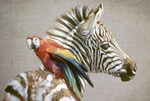 Animals / N.A. Noel Animal Paintings