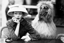 Dogs and Fashion