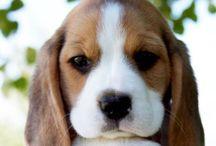 Puppy♡