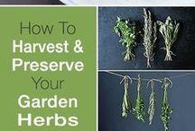 Preserving herbs & veggies