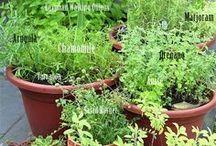 Gardening - Herbs & veggies