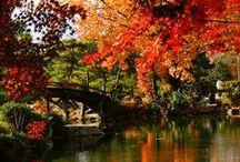 wonderFALL / Fall foods, fall fun, fall decorations!