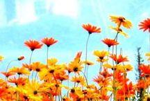 {Bloom} / Gardening tips, flower arrangements, flowers and gardens