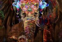 Elephant / I believe Elephants are the most gracious, selfless animals in the world, <3