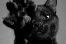 i want kitty!