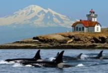 Anacortes/San Juan Islands / The most beautiful spot in the Pacific Northwest! Coast in! Hang out!