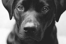 i want doggy!